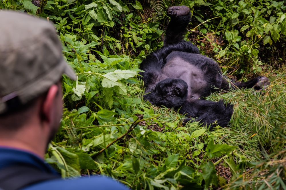 Gorilla Tracking in Mgahinga Gorilla National Park by Marcus Westberg