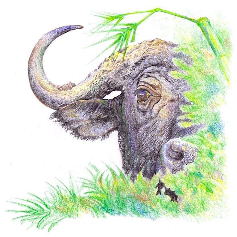 Buffalo by Martin Aijuka Depories