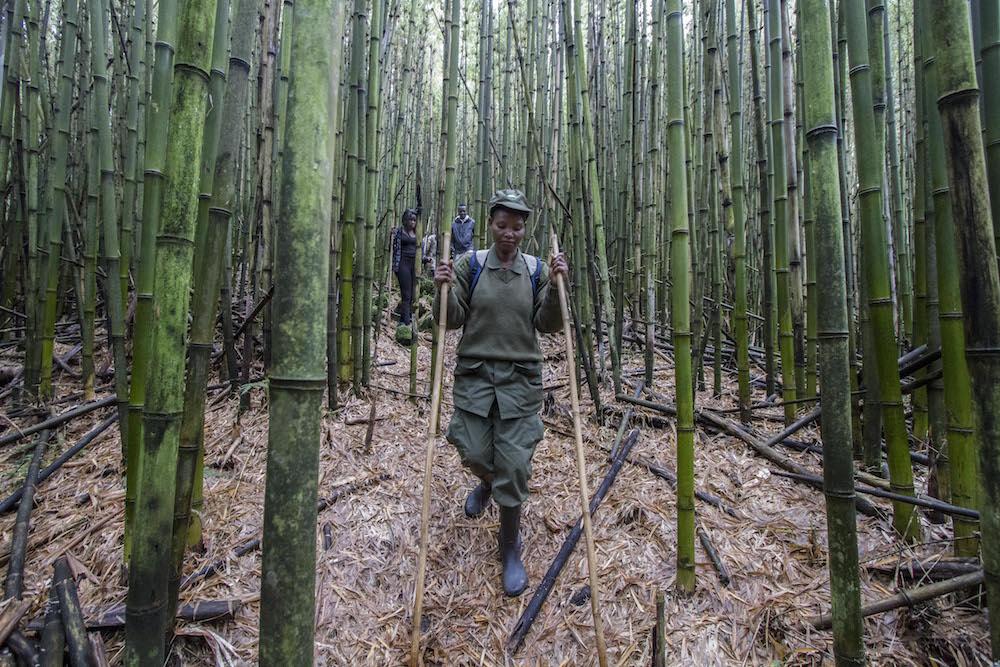 press_trip_bamboo