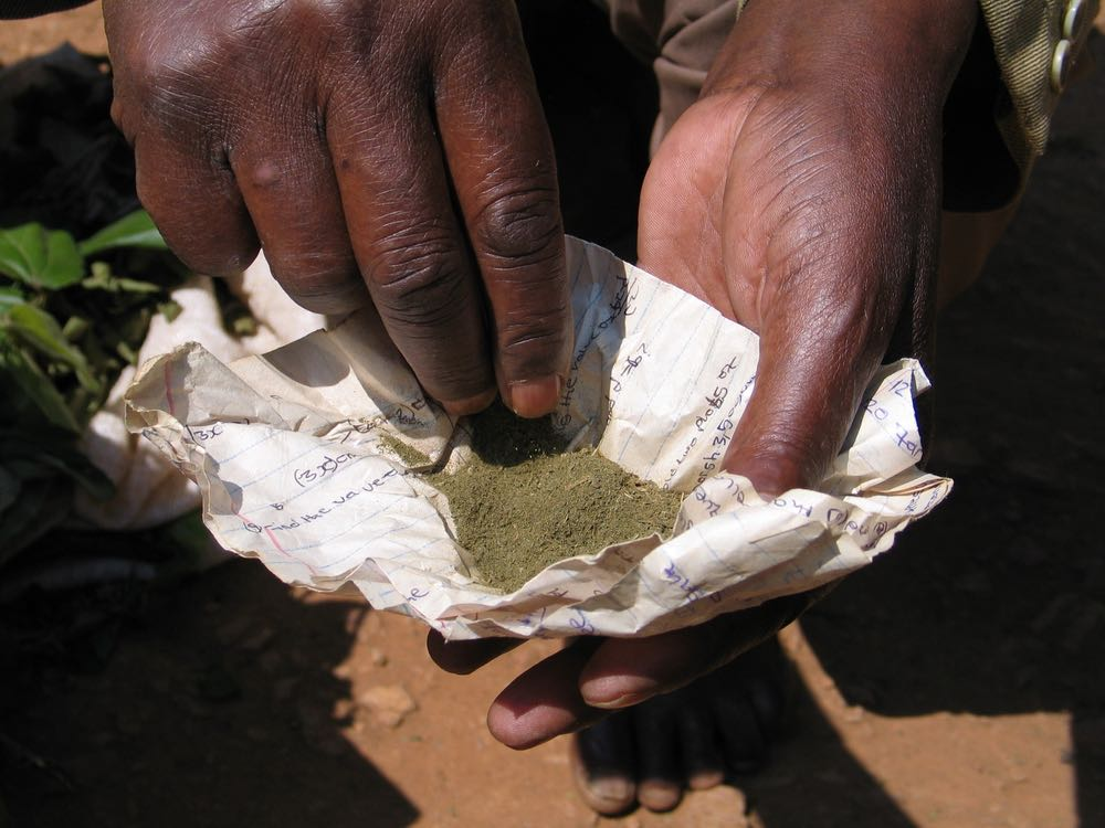 Herbal medicine in the hands of Jeremiah Byaharugo; photo by Miha Logar