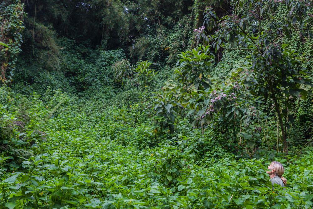 Sandra Gray in Mgahinga Gorilla National Park; photo by Marcus Westberg