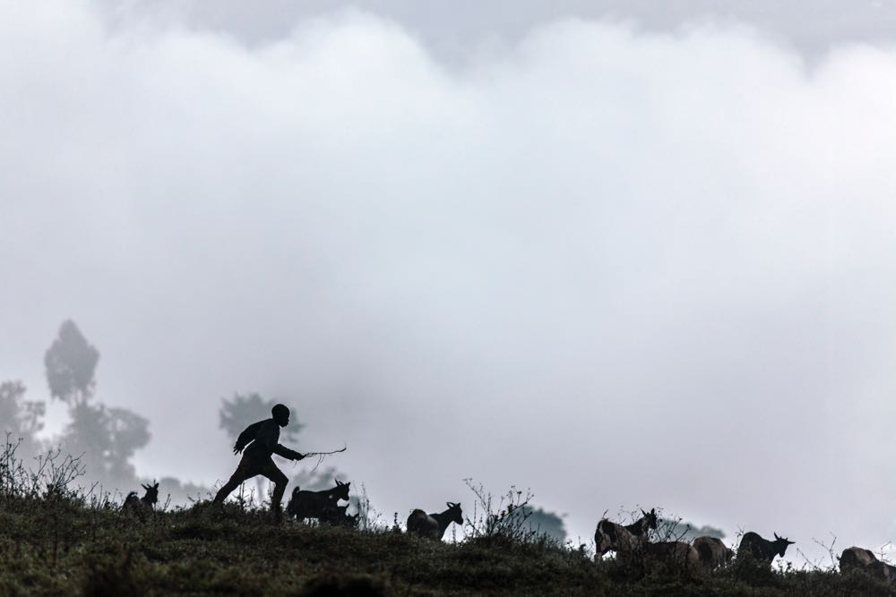 Shephard in the Gorilla Highlands; photo by Jiro Ose