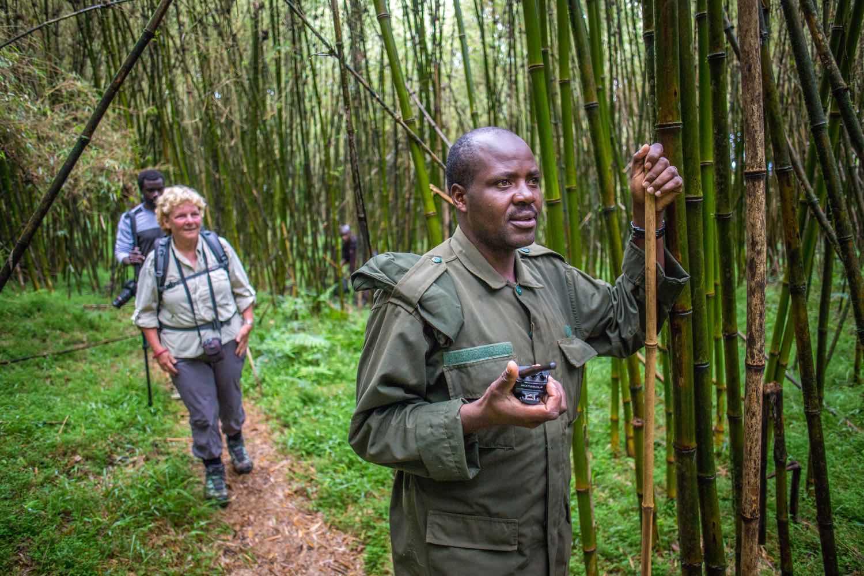 Tracking golden monkeys by Jiro Ose