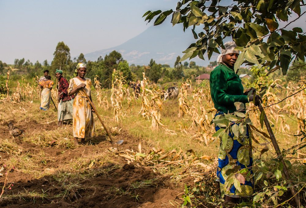 Women working next to the road to Kisoro; Lake Kayumbu with Mt Muhavura in the background; photo by Stefano Barazzetta