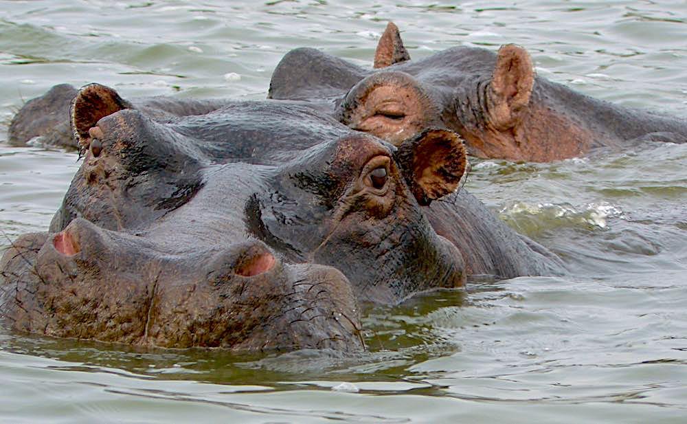 This photo was NOT taken at Lake Mutanda, Bwindi or Lake Bunyonyi; photo by Sara Cook